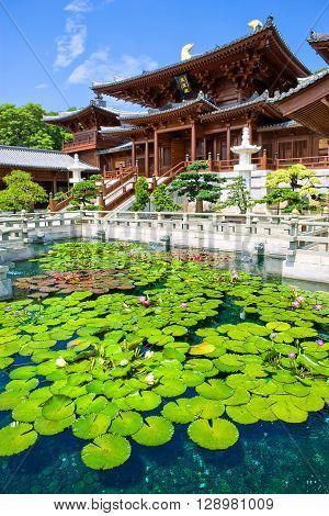 Hong Kong the pond with flowers of the Chi Lin antique monastry in the new Kowloon quarter