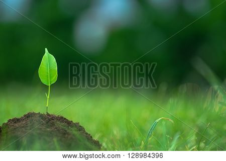 Small Green Plant Starting To Grow From The Pure Soil Over The Green Grass Background