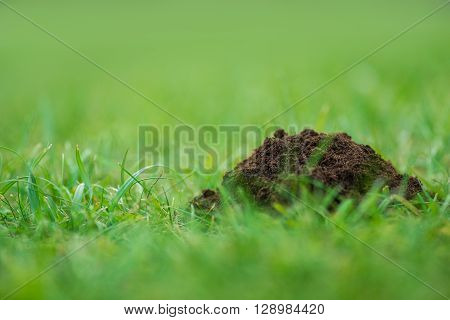 Pile Of Pure Soil On The Fresh Green Grass
