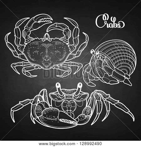 Graphic vector crab collection drawn in line art style. Sea and ocean creature isolated on chalkboard. Top view. Seafood element. Coloring book page design