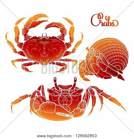 Graphic vector crab collection drawn in line art style. Sea and ocean creature isolated on white background in red colors. Top view. Seafood element. Coloring book page design