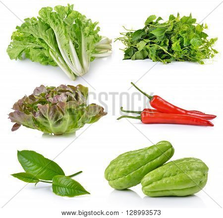 green tea leaf Chayote Green Oak Red chili pepper Bitter gourd lettuce on white background