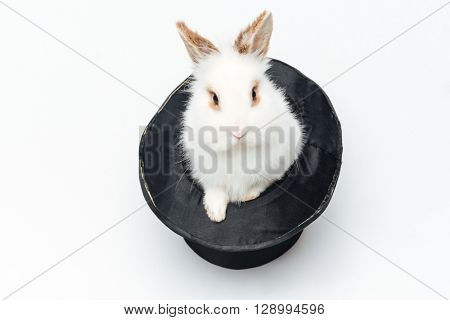 Rabbit in a hat