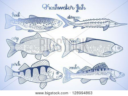 Graphic freshwater fish collection drawn in line art style. Sturgeon, roach, zander, trout, carp, perch for seafood menu. Freshwater creatures isolated on white background