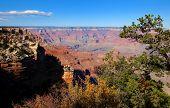 Trees In The Grand Canyon, Arizona.
