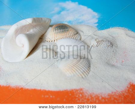 Sand With Sea Shell