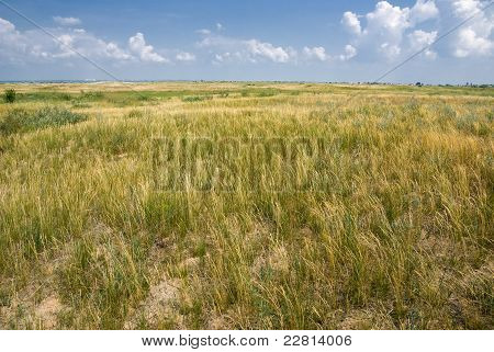 Yellow-green Summer Steppe
