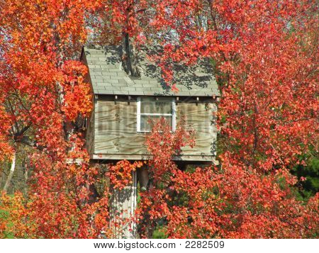 Unusual Tree House With Brilliant Fall Foliage