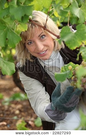 portrait of a wine-grower
