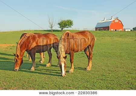 Horses And A Barn