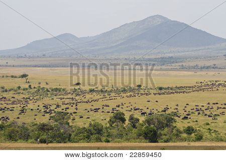 The Great Migration In The Masai Mara Natural Reserve
