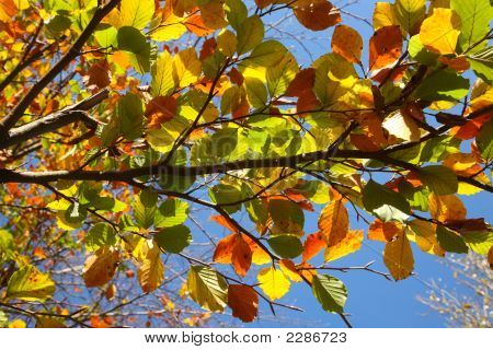 Close Up Of Colorful Leaves.