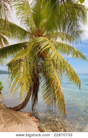 Tropical beach with big palm tree in front of the sea