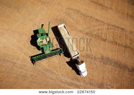Harvester on a field emptying lentils into a semi-truck