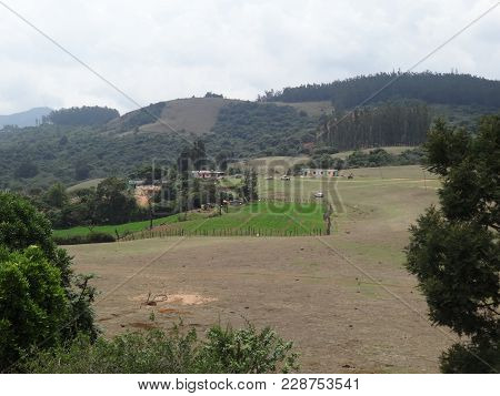 poster of Awesome View Of Carrot Garden Near Hill ,ooty,india