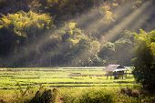 Cottage In Soybean Garden Among The Mountains And Surrounded By Forests, Morning Light In Summer. Th poster