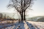 Winter Sunset Landscape With The Frosty Winter Trees And Sunlight. Winter Landscape Scene. Winter Ru poster