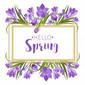 Crocus Flowers Spring Floral Beautiful Violet Flowering Illustration Vector Nature Purple April Plan poster