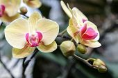 Постер, плакат: Orchid Flower In Orchid Garden At Winter Or Spring Day Orchid Flower For Postcard Beauty And Agricu