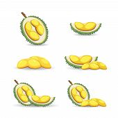 Halves Of An Exotic Durian Fruit Isolated On A White Background. Mature Durian Fruit Or A Smelly Fru poster