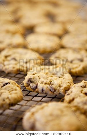 Freshly backed chocolate chip cookies - shallow depth of field