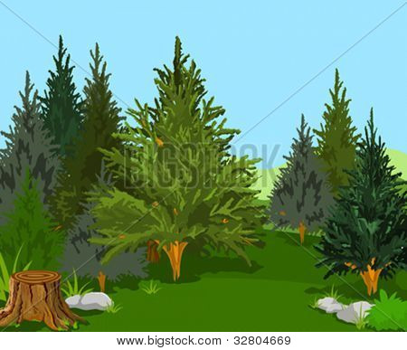 A Green  Forest Landscape with Pine Trees