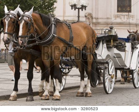 Horses And Carriage In Prague
