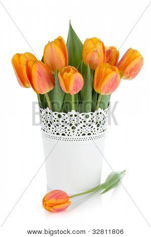 Tulipas laranja em vaso. Isolado no fundo branco
