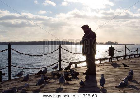 Backlit Man Feeding Seagulls