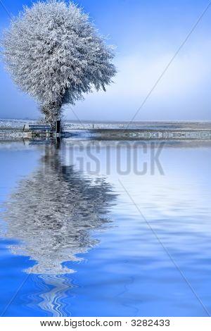 Winter Landscape A Single Tree