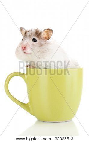 niedliche Hamster in isoliert Tasse weiß