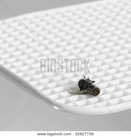 Dead Insect On Fly Flap