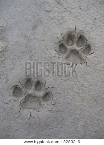 Puma Steps Djungle Foot Prints