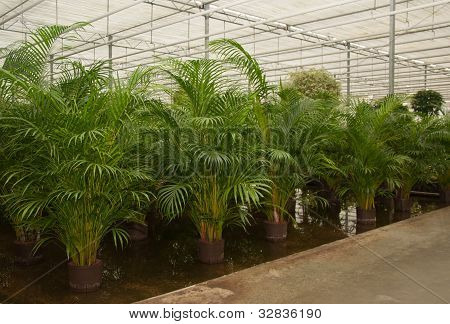 Various Houseplants In A Hydroculture Plant Nursery