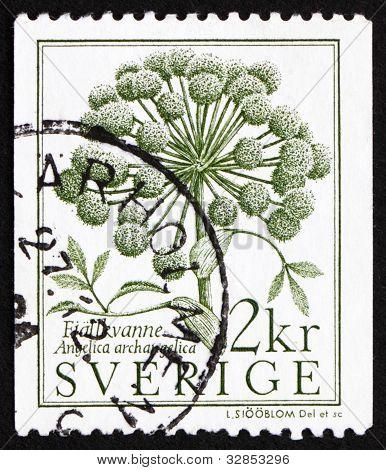 Postage stamp Sweden 1984 Garden Angelica, Angelica Archangelica