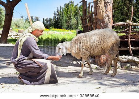 NAZARETH, ISRAEL - APRIL 24: Man dressed as a first-century herder feed his sheep at Nazareth Village, a representation of life at the time of Jesus in Nazareth, Israel, Apr 24, 2012