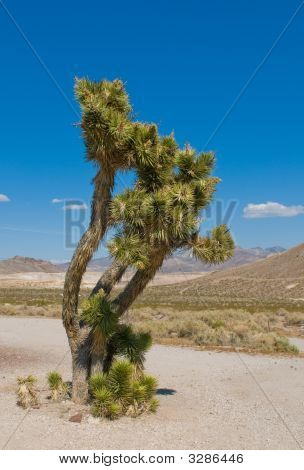 Joshua Tree, California, Southwest Usa