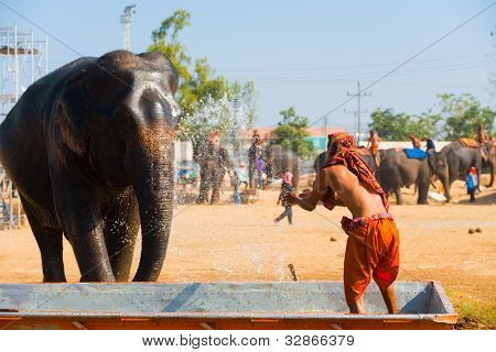 Elephant Trainer Splashing Water