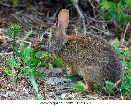 Bunny Eating