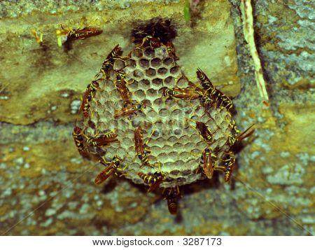 Beehive Closeup