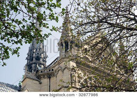 spring at Notre Dame de Paris