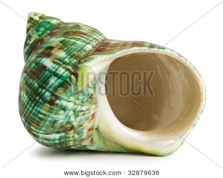 Hermit Crab Shell