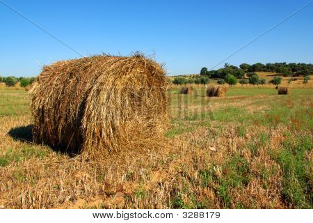 Stroh rolls