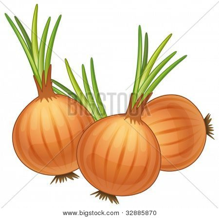 illustration of some brown onions