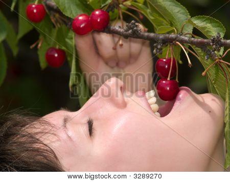 Cherry Tasting