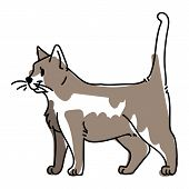 Loose Lineart Pet Cat Illustration. Hand Drawn Sketchy Kitty Breed, Childrens Doodle Of Feline Anima poster