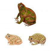 Vector Illustration Of Frog And Anuran Sign. Collection Of Frog And Animal Vector Icon For Stock. poster