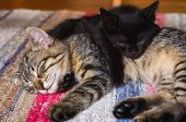 Black Kitty And Tabby Kitty Sleeping On Top Of Each Other poster