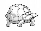 Retro Cartoon Mono Line Style Drawing Of A Galapagos Tortoise Or Geochelone , An Endangered Wildlife poster