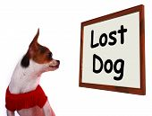 pic of runaway  - Lost Dog Sign Shows Missing Or Runaway Puppy - JPG